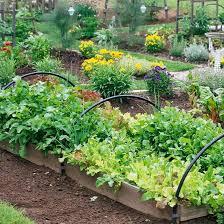 practical vegetable garden designs 24