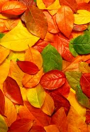 autumn leaves wallpaper for iphone x 8