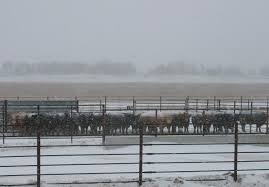 Winter Weather Requires Major Shift In Cattle Management Drovers
