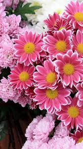 flower iphone wallpapers top free