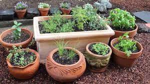 top 50 medicinal plants for garden