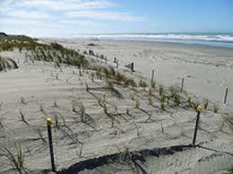 Soft Engineering For Coastal Erosion