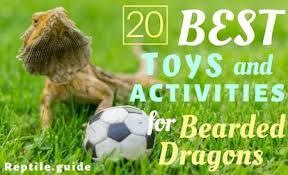 20 fun bearded dragon toys activities