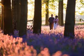 Photograph Bluebells On Fire by Polly Thomas on 500px | Romantic ...