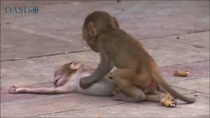 القرود تتشارك الحزن والحداد على الميت من قبيلتها Youtube
