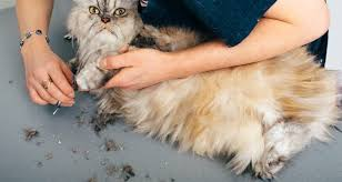 Mobile Pet Grooming Service: What Are the Benefits and Drawbacks?