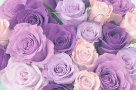 ultimate purple rose meaning guide