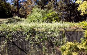 Best Climbing Plants Burke S Backyard