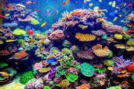 沖縄の海に珊瑚を増やしたい - Kanatta
