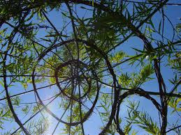 Living Willow Structures Lowimpact Orglow Impact Living Info Training Products Services