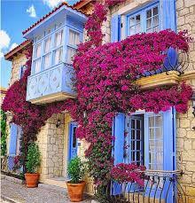 صور ورود كبيرة صور ورد وزهور Rose Flower Images