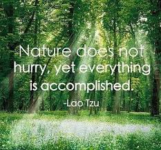nature surrounds you feel it nature quotes nature quotes