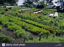 organic vegetable garden with chives