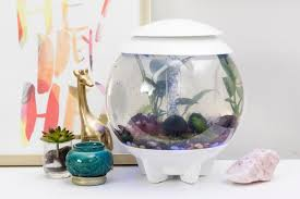 best plants for a betta fish