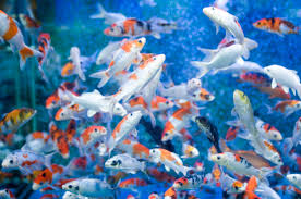 best 36 fish backgrounds that move on