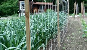 5 Fun Ideas For A Sugar Snap Pea Trellis Hobby Farms