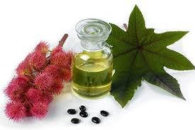 Ricino aceite - Oleoteka