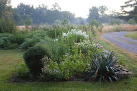 how to successfully grow perennials a