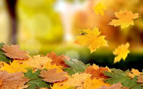 golden falling leaves wallpapers
