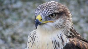 صور حيوانات جودة عالية Hd اجمل صور خلفيات الحيوانات أجيال