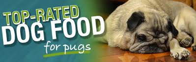 what is the best dog food for a pug