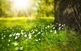 Kwiat łąki Darmowe zdjęcie - Public Domain Pictures