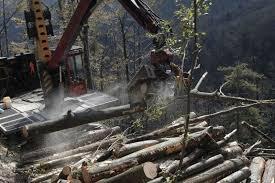 gozdovi naj bi vodil dirr