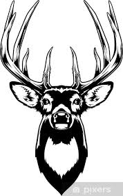 Whitetail Deer Head Wall Mural Pixers We Live To Change