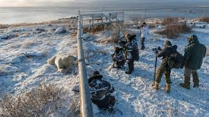 Walking With Polar Bears Wild Frontiers