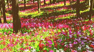 flower garden wallpaper hd full screen