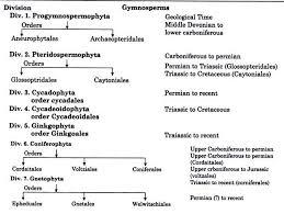 gymnos definition external