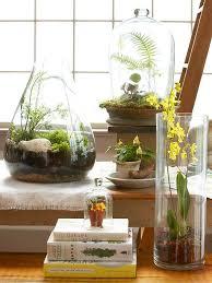 terrarium plants garden terrarium
