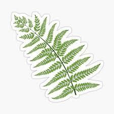 Fern Leaf Sticker By Smaragdas Redbubble