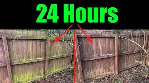 Remove Mold And Algae Fence And House Youtube