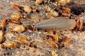 View White Termites With Wings  PNG