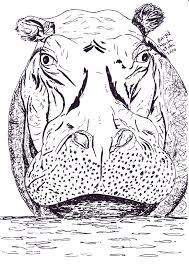 Pentekening Van Een Nijlpaard Getekend Door Brigit Weeda