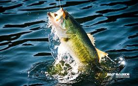 b fish wallpaper b fish