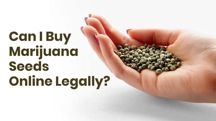 Image result for Is Buying Marijuana Seeds Legal In Michigan?""