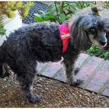 lost dogs in gallatin tn lost my doggie