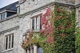 The 'Hall-y' and the Ivy: Johnston Hall Exterior Getting TLC in Months  Ahead - U of G News