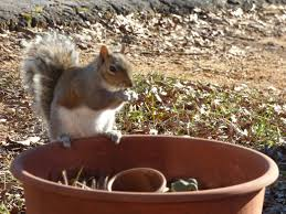 keeping squirrels out of conners