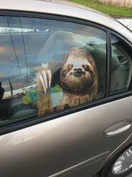 This Sloth Window Sticker Mildlyinteresting