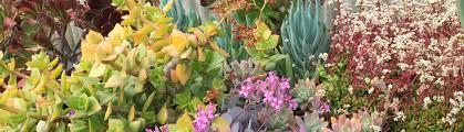 succulent nurseries and growers san
