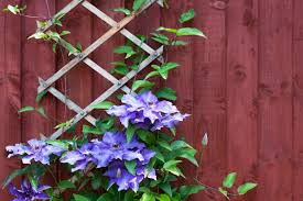 using climbing plants in your garden