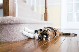 how to stop a cat scratching carpet