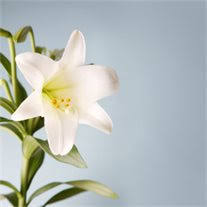 Myrna Ruth Clark Obituary - Visitation & Funeral Information