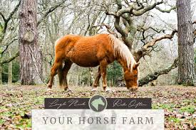 Ramm Horse Fencing Stalls Posts Facebook