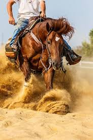 beautiful reining quarter horse