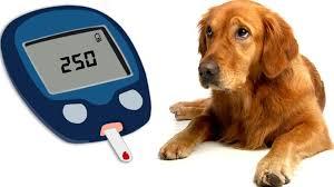 10 best diabetic dog food brands t