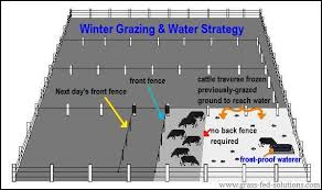 Electric Fencing And Cattle Water During The Winter Pasture Rotation